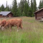 Kor på Hammarbergsvallen