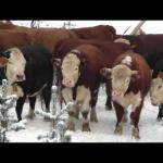 Kor väntar på att få gå